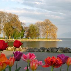 Le Verger - Lake Geneva flowers - Rolle